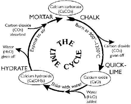 Circle Diagram Of Calcium Diy Enthusiasts Wiring Diagrams